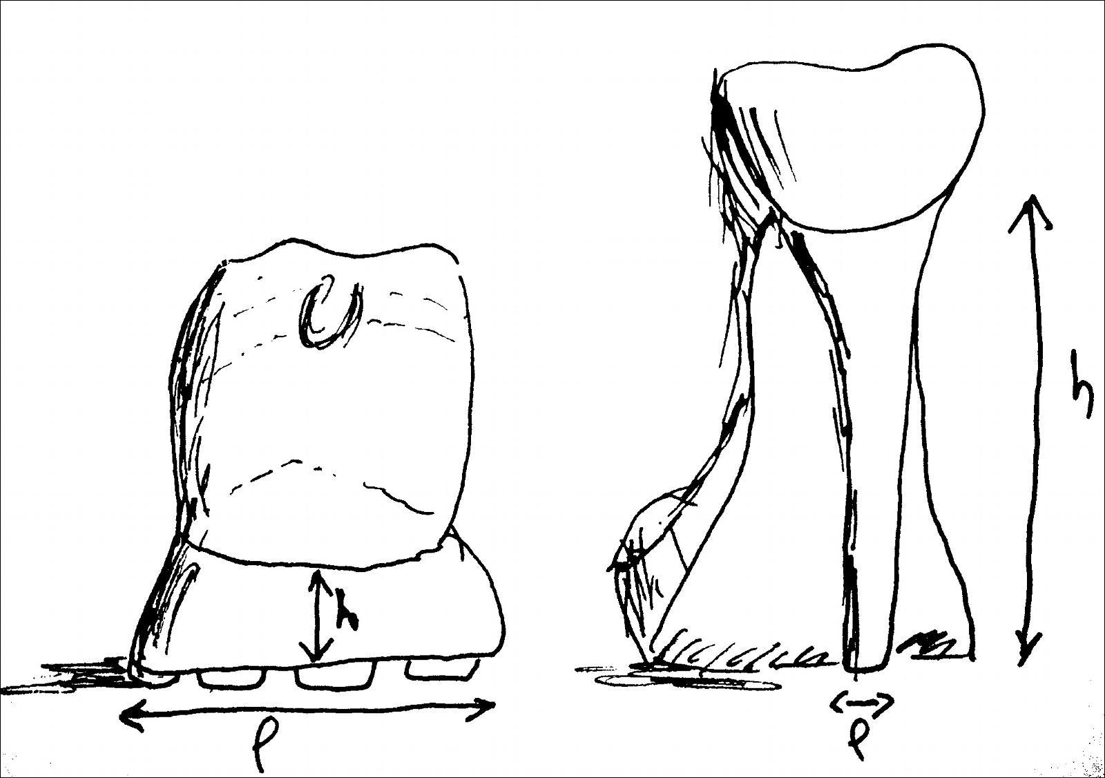 Rapport de stabilité h/l  chaussures vues de dos. h la hauteur du