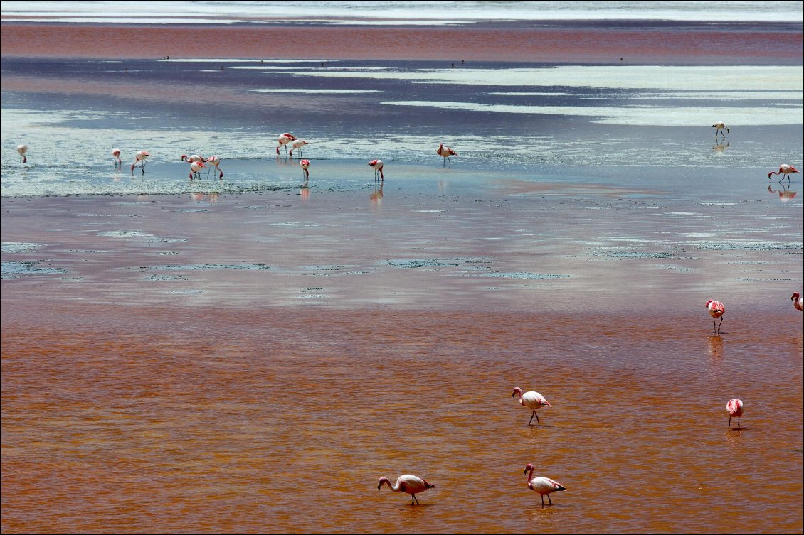 Flamants sur les lagunes du Sud Lipez Photo Manu d'Adhémar