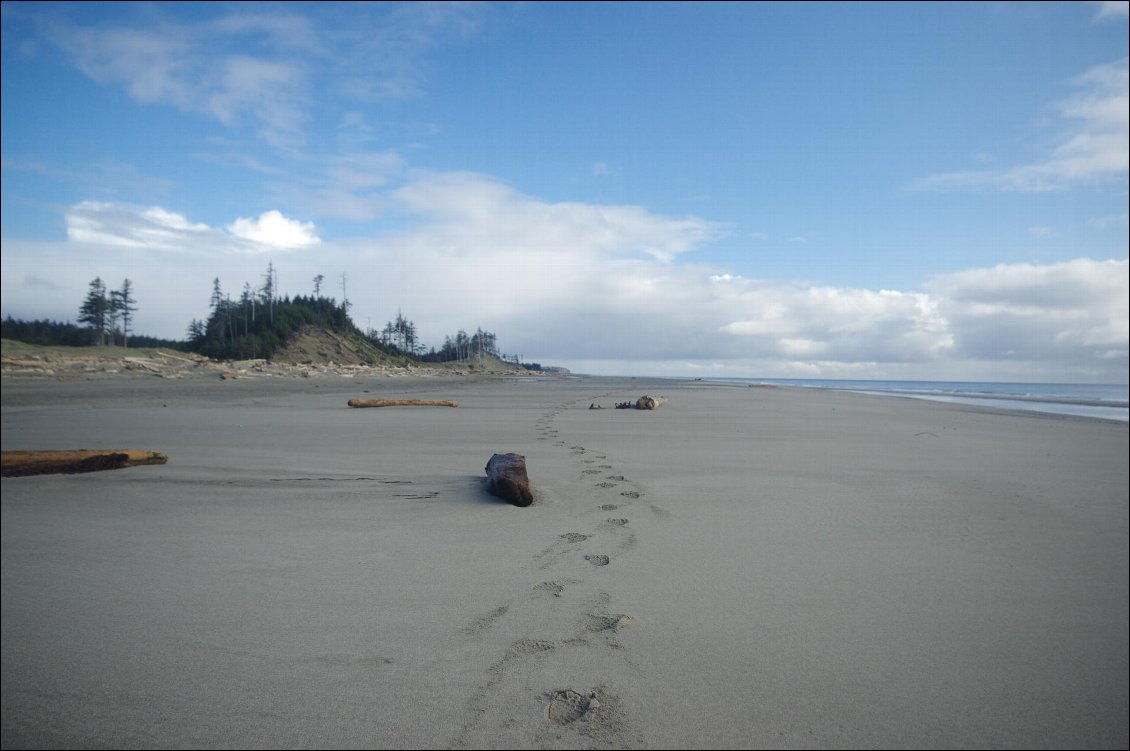 Couverture de East beach trail (Haida Gwaii)